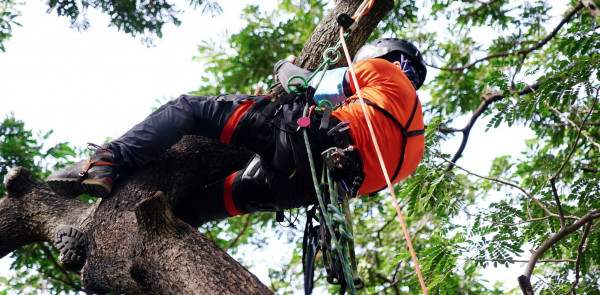 A Few Signs to Know That You Need an Arborist